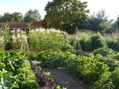 New Mexico veggie garden, all organically grown.