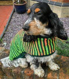 Purdey - Dog Coat 3 | Flickr - Photo Sharing!