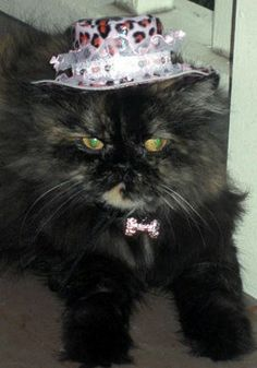 Jungle Jane pink leopard print cat hat and reversible Wild Side Collar