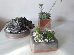 Vasos em argamassa de cimento com suculentas