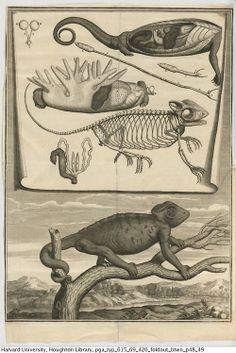 Perrault, Claude, desde 1613 hasta 1688. Description anatomique de un Cameleon, 1669.  Tipo 615.69.426  Houghton Library de la Universidad de Harvard