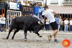 """torodigital: Exhibición del toro de la peña """" K-nut """" en Monco..."""