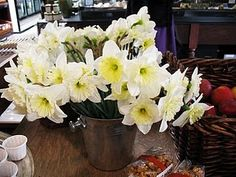 Happy Spring time daffodils!