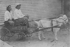 Two boys in goat cart.