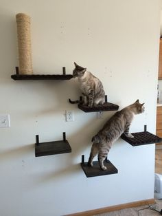 We use these shelves as stepping stones for our cats to get to some of our larger pieces and as perches for our cats around the house.  We