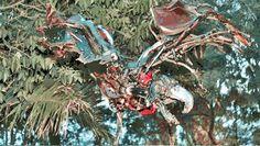 Cacatua.Recycle iron maiden.Juan Bautista Olmedo