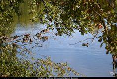 Je crois que c'est leur petit coin de sieste - Lac du Coulon