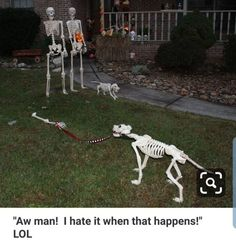 Halloween Outside, Outdoor Halloween, Halloween Porch, Holidays Halloween, Halloween Fun, Halloween Graveyard, Halloween Skeleton Decorations, Halloween Displays, Halloween Projects