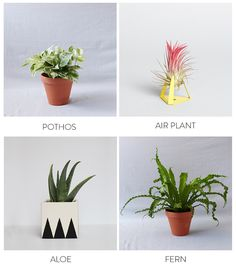 The Best Plants to B