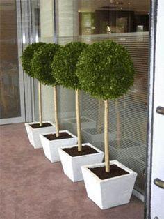 Hortus Verde - Indoor topiary-Hortus Verde-Signalétique boulier