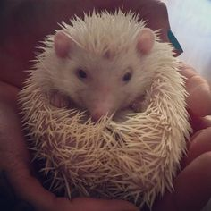 Ball of prickles