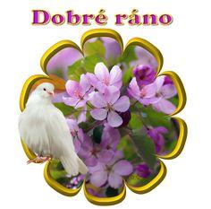 Ráno « Rubrika | helene23 Good Morning, Night, Photos, Buen Dia, Pictures, Bonjour, Good Morning Wishes
