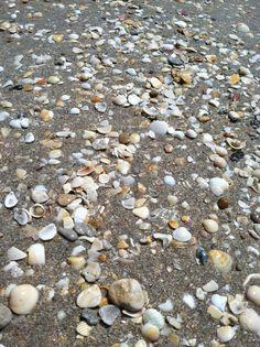 Boynton Beach (Floride, USA) - Belle plage, bon vent et fabuleux trésors à ramasser pour vos tout petits...