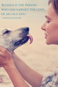 'Blessed is the person who has earned the love of an old dog.' - Sydney Jeanne Seward