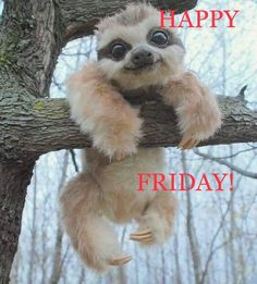 This face makes my ❤ happy! Happy Friday Gif, Friday Wishes, Happy Friday Quotes, Fun Weekend Quotes, Weekend Humor, Funny Weekend, Morning Memes, Good Morning Quotes, Funny Morning