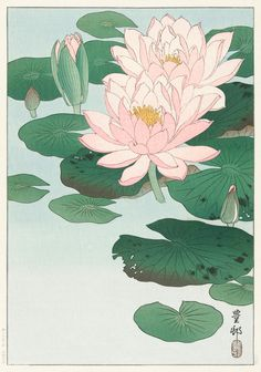 Water lily flower art print poster antique prints Botanical Art Prints Home Decor Wall flower art print Japanese flowers botanical print Gorgeous Japanese wood block Art Print Poster. This print is digitally enhanced with some odd blemishes left to enhanc Ohara Koson, Japanese Wall Art, Japanese Prints, Korean Art, Asian Art, Woodblock Print, Illustration Blume, Guache, Japanese Flowers