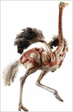 文字通り「一皮むいた」だけの動物達の剥製いろいろ