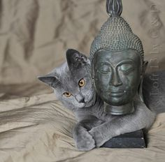 monicaoldenburg:  I love my Buddha ! by C & D Photo on Flickr.