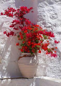 Όπως η μέλισσα γύρω από ένα άγριο λουλούδι, όμοια κ' εγώ. Τριγυρίζω διαρκώς γύρω απ' τη λέξη. ~Νικηφόρος Βρεττάκος photo by Greece Art & Architecture