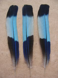 3 rare Indian Roller bird blue feathers by kellycat on Etsy, $7.00