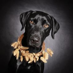 Photographer Helps Often-Overlooked Black Dogs Get Adopted With Beautiful Portraits - Barkley, 2 years old