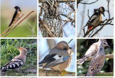 Trilurile vesele, precum și simpla prezență a păsărilor fac lumea asta mai frumoasă. Testează-ți cunoștințele și găsește păsările în imagini