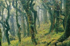 The Goblin forest in New Zealand