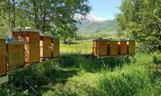 Shops, Mountains, Nature, Travel, Honey Bees, Bees, Voyage, Tents, Retail