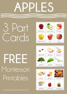 Apple 3-Part Printables and Boom Cards - 1+1+1=1 Learning Activities, Activities For Kids, Apple Ideas, Apple Theme, Granny Smith, Apple Slices, Candy Apples, Apple Products, Apple Recipes