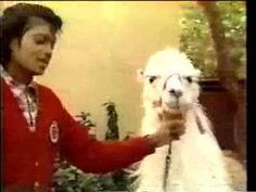 Michael Jackson and Louie the Llama