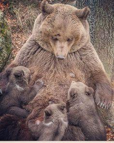 Хочу пожелать всем-всем медвежатам и зверятам,участвующим в  #хеллотедди найти своих самых любящих мамочек!А всем Создателям этих прекрасных комочков счастья- незабываемых тёплых встреч и много -много улыбок! Спасибо вам дорогие за бесконечное удовольствие,  прикоснуться к прекрасному!В эту выставку, нежданно негадано и уж конечно же никак не запланированно ,но я триждыстану мишкОмамой! #helloteddy2016