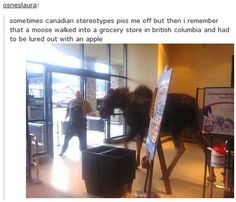 Funny pictures about Tired Of Canadian Stereotypes. Oh, and cool pics about Tired Of Canadian Stereotypes. Also, Tired Of Canadian Stereotypes photos. Cute Animal Memes, Funny Animal Pictures, Funny Animals, Funny Tumblr Posts, My Tumblr, Funny Quotes, Funny Memes, Hilarious, Funniest Memes