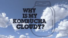 Are you looking to see why is my Kombucha cloudy? Then visit Fermentaholics today to learn more now. Kombucha How To Make, Home Brewing, Simple Living, Learning, Sustainability, Beverages, Foods, Baking, Health