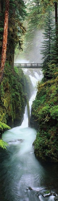 The mix of colors here is fantastic, the deep greens and browns of the forest contrast really nicely with the deep blue and white mist of the water