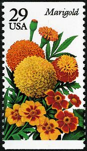 29c Marigold stamp. :) What could I do with this???