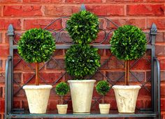 Inspired by an art which pinnacled in European gardens, Bella Marie's preserved boxwood topiaries are crafted using only the finest material. The boxwood is specially preserved to maintain the lush green color and natural appearance.