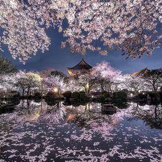 Sakura Night (Japan) by Takahiro Bessho