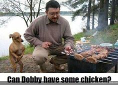 Can Dobby have some chicken?