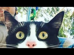 That's Purrfect: Canopy Cat Rescue
