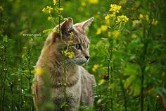 📷 Credit: Pixabay. #cat #photo #wild #free #animals #photography #hunter #nature #predator #America #Europe #Asia #Africa #forest #friends #cute #animal #male #female #love #Wear #Pet #Wear_Pet #cazador #amigo #gato #mascota #chat #WearPet #feline #кошка #gatto Wild Animals Pictures, Animal Pictures, Online Pet Store, Cat Care Tips, Cat Behavior, Cool Landscapes, Cat Breeds, Animal Photography, Cats And Kittens