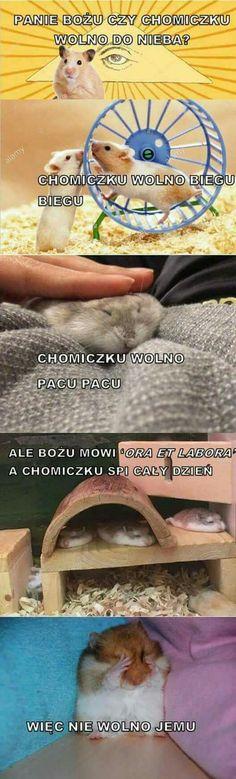 Animal Memes, Funny Animals, Cute Animals, Ora Et Labora, Laugh Or Die, Polish Memes, Weekend Humor, Aesthetic Memes, Funny Mems