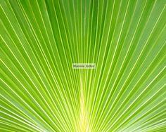 Green Palm 8 x 10 Fine Art Photograph Bahamas by marmiejotter, $15.00