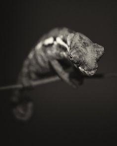 Animal Portraits by Vincent Lagrange