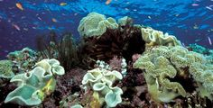 Coral Reef Facts 31st March 2014