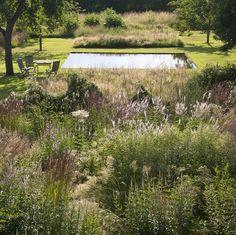 """Le jardin """"Plume"""" et le bassin en été"""