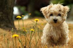 Pravilna briga i negovanje jednog psa može vas koštati čitavo bogatstvo na godišnjem nivou, ako se uračunaju vakcine, hrana i prateći proizvodi za negu…