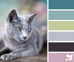 cat hues: dark teal, faded turquoise, sage green, deep grey, dark purple brown, faded purple