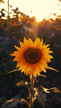 Wallpaper Nature Flowers, Sunflower Wallpaper, Beautiful Flowers Wallpapers, Beautiful Photos Of Nature, Beautiful Nature Wallpaper, Nature Pictures, Beautiful Landscapes, Aesthetic Pastel Wallpaper, Aesthetic Backgrounds