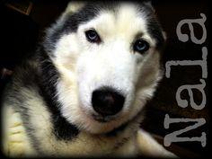 My furry best friend