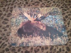 All mouse pads are in stock and shipping within 24 hours!  And FREE shipping as always!  Moose Mouse Pad - Moose at Rest  $10